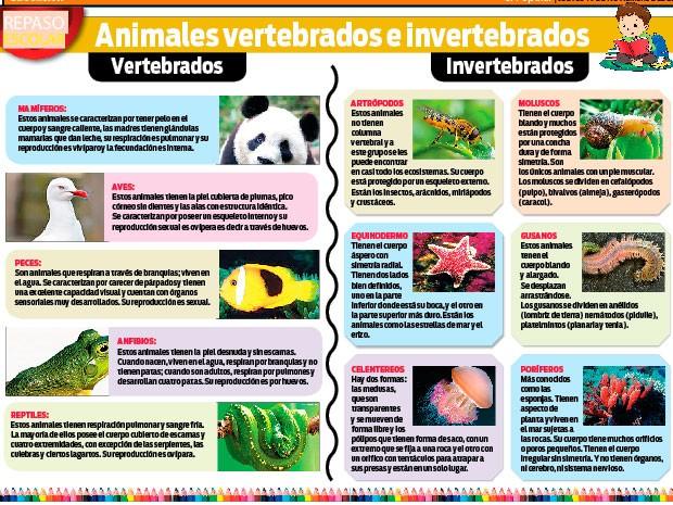animalesaaaaNoticia-141001-animales