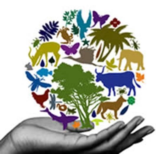 biodiversidadimage001
