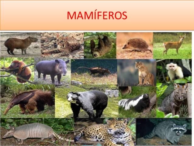 mamiferos-1-638