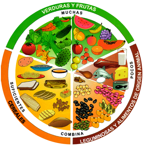 nutricioncirculo nutrimental 2
