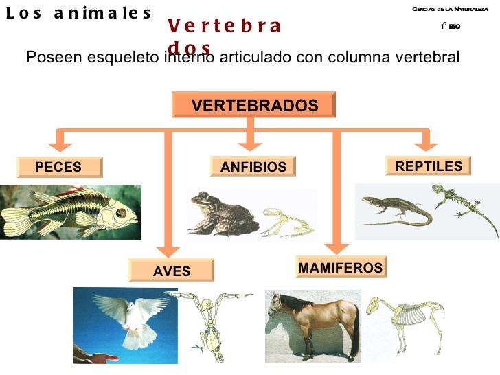 vertebrados-1eso-1-728