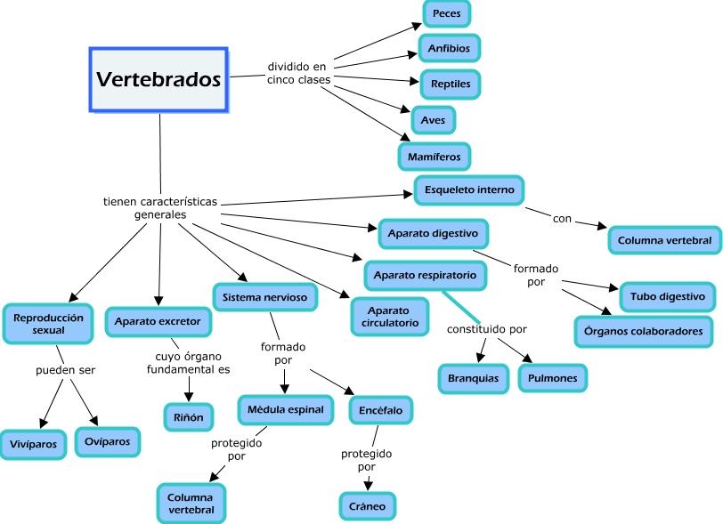 vertebrados Beatriz Carreta.cmap