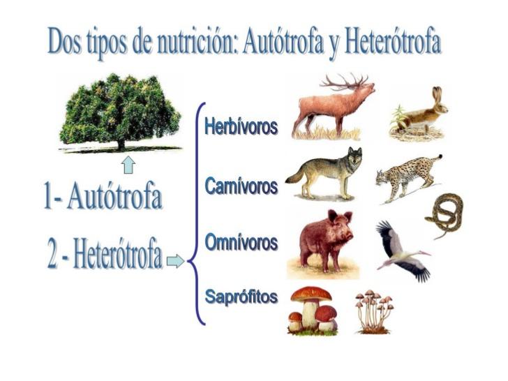 zzzzzzzzzzzzzznutricion-auttrofa-y-hetertrofa-2-728