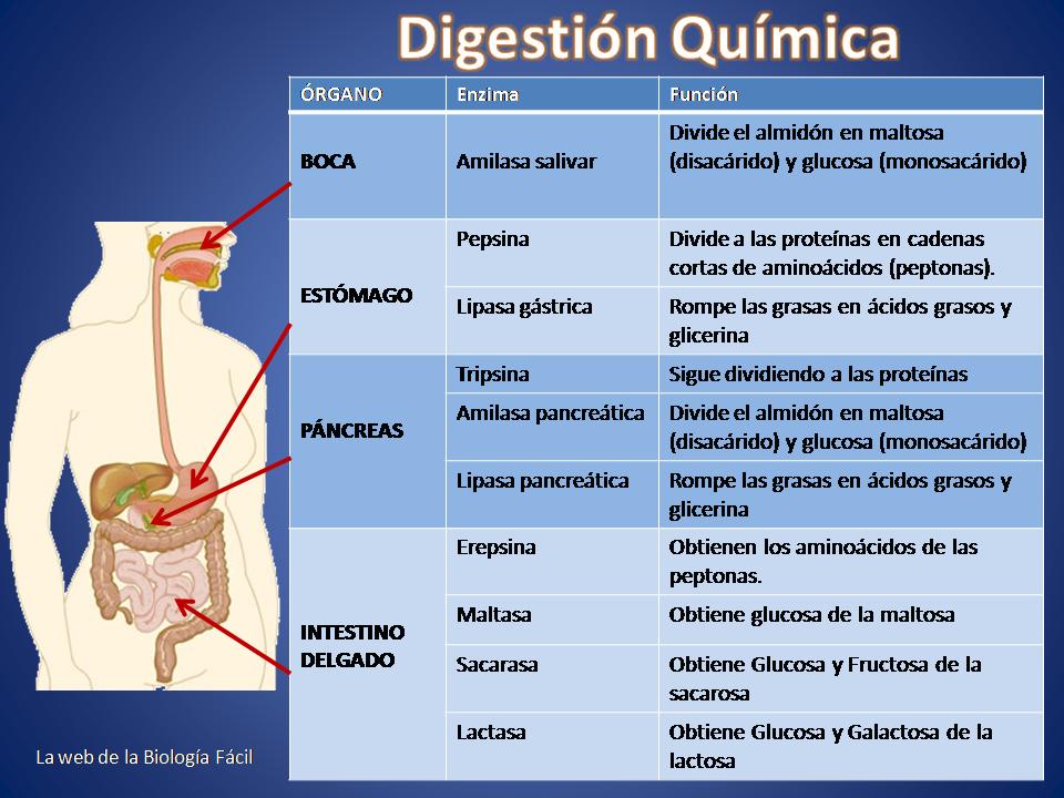 Digestión química