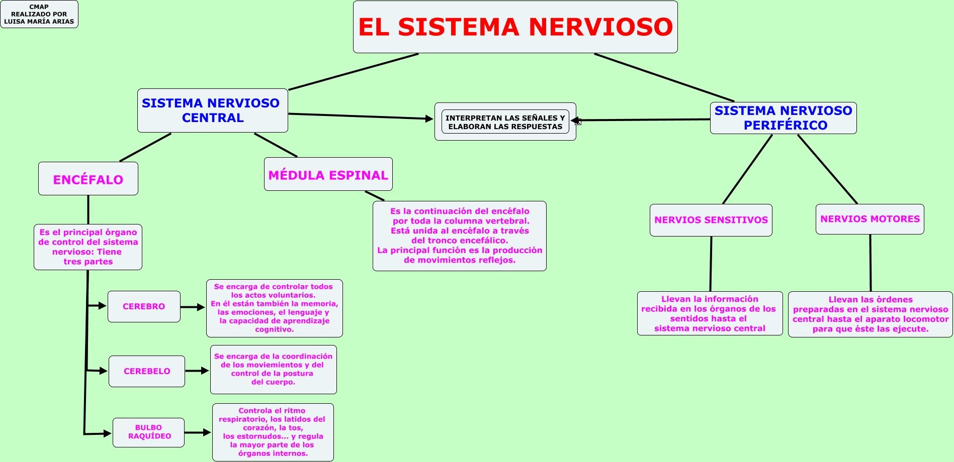 Cuadros sinópticos sobre el Sistema Nervioso Central y Periférico ...