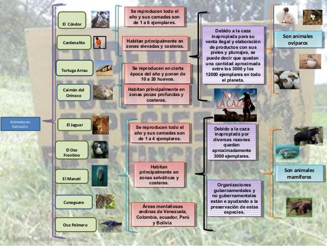 animalescuadro-sinoptico-animales-en-peligro-de-extincin-2-638