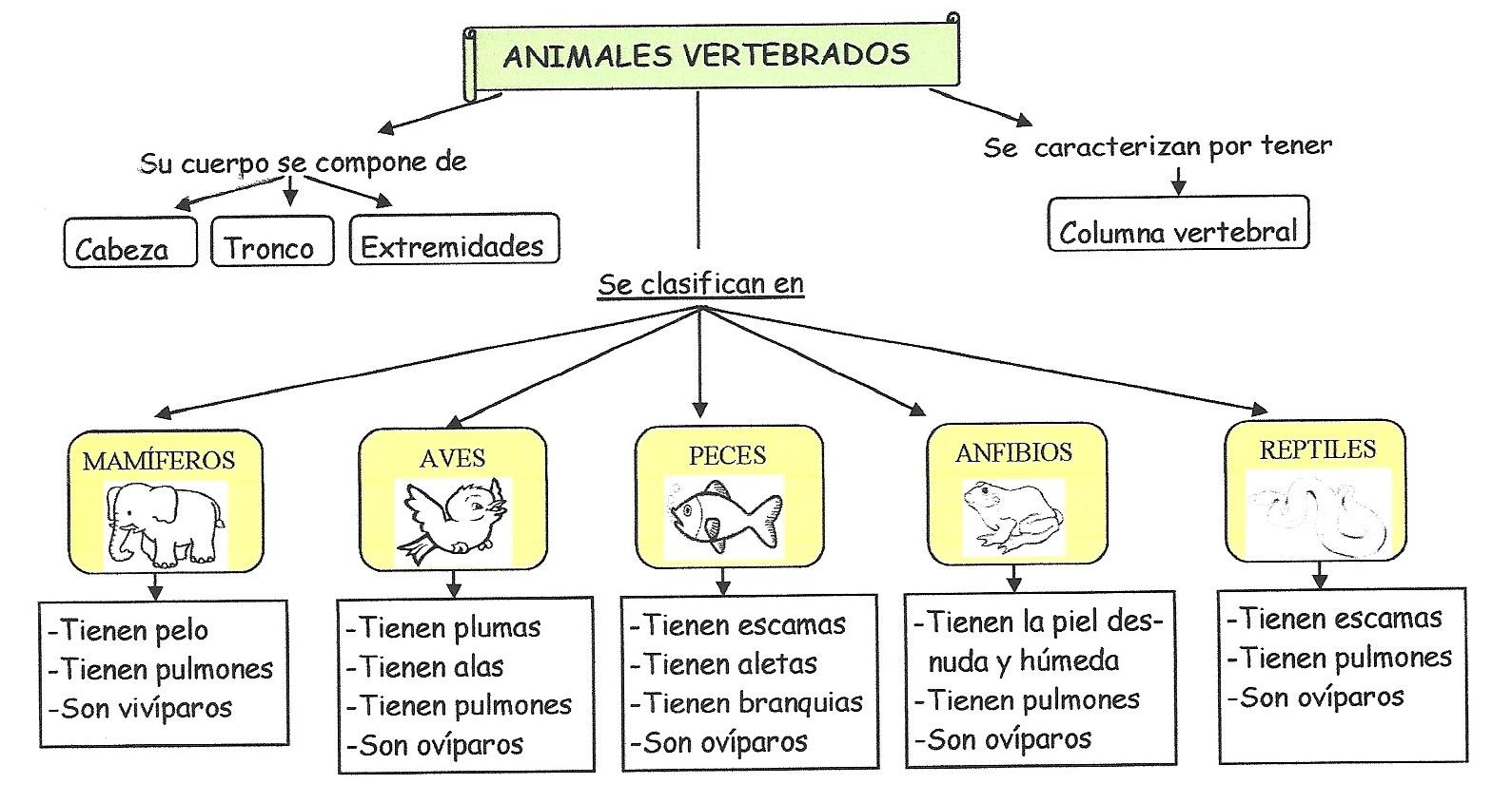 animalesesquema vertebrados