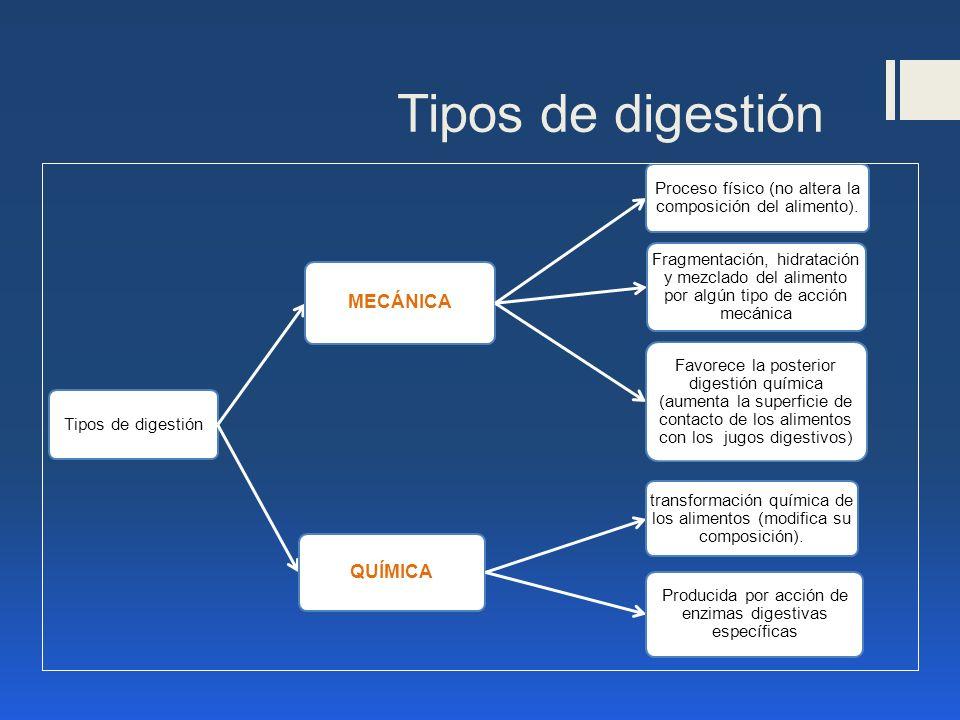 digestionslide_3