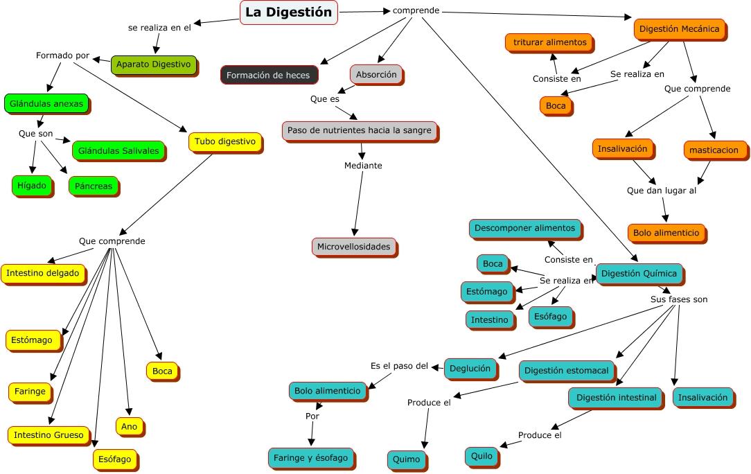 Cuadros sinópticos sobre la digestión | Cuadro Comparativo