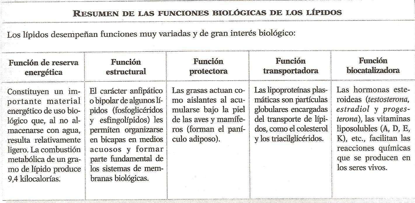 lípidos-en-el-organismo-3