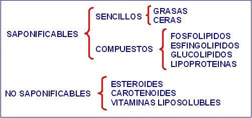 lipidos13_11_29_LIP1