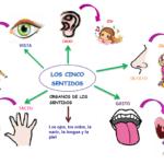 cuadros comparativos de los sentidos: Ejemplos e imágenes