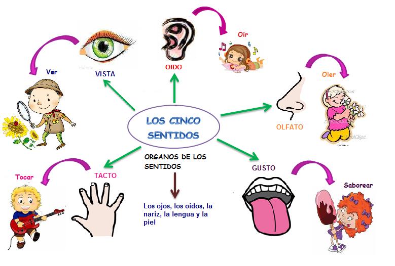 Cuadros comparativos de los sentidos ejemplos e im genes for El divan de los sentidos