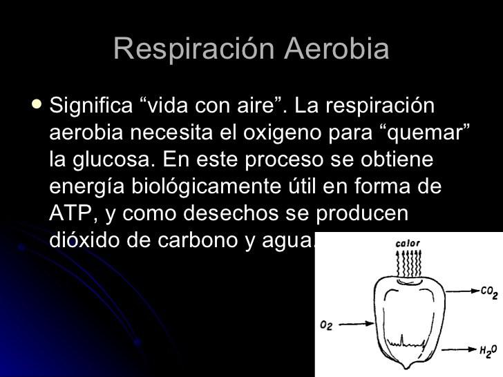 comparacion-entre-la-respiracion-aerobia-y-anaerobia-4-728