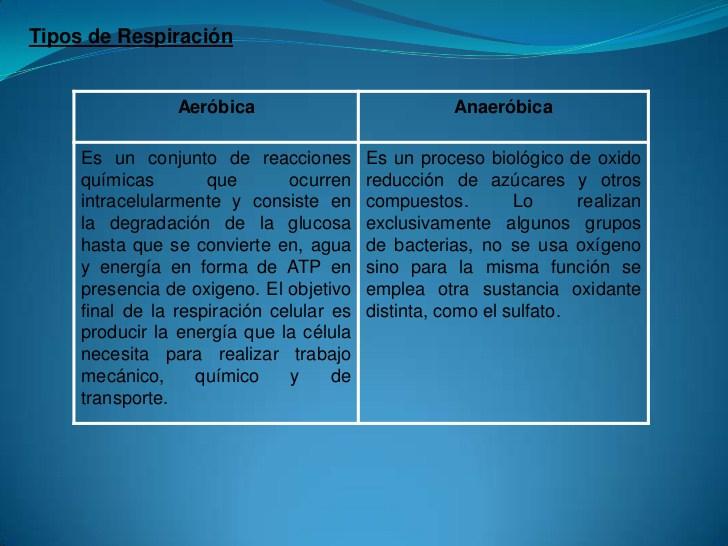 la-fotosintesis-y-la-respiracion-10-728