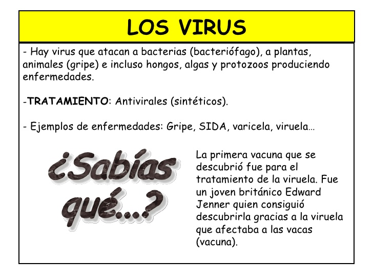 virus-bacterias-hongos-y-protistas-3-728