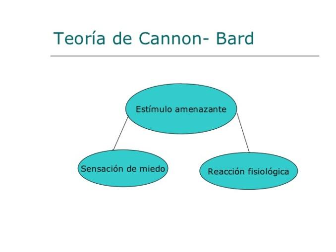 neuro-emociones-diapositivas-vale-presentamos-tp-6-728