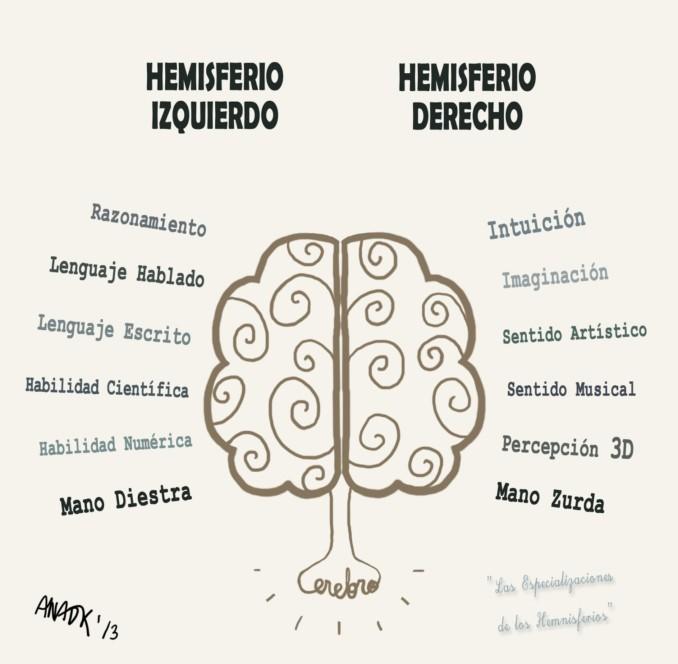 ana-dk_hemisferios-cerebrales