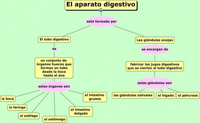 El-aparato-digestivo.cmap_