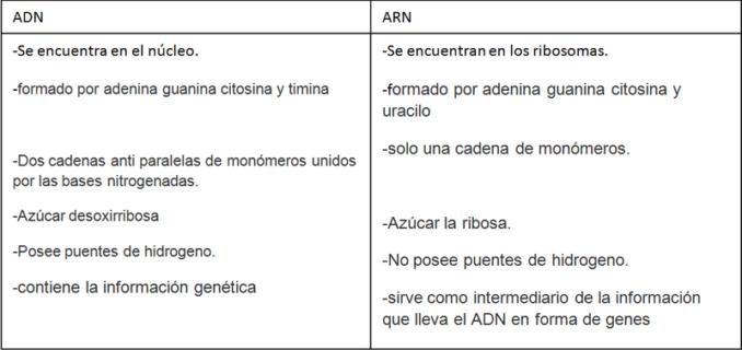 diferencias_adn_y_arn