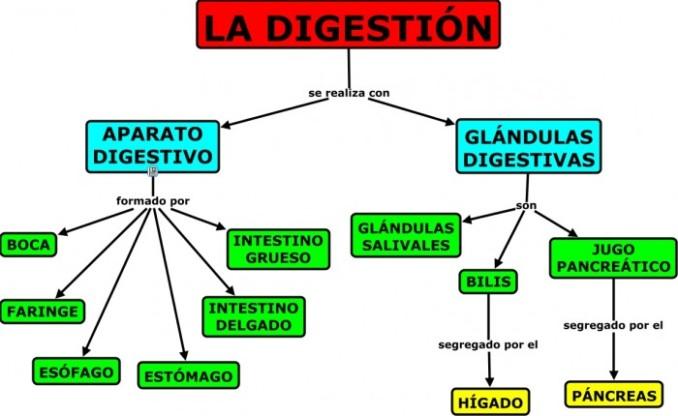 Cuadros sinopticos del sistema digestivo | Cuadro Comparativo