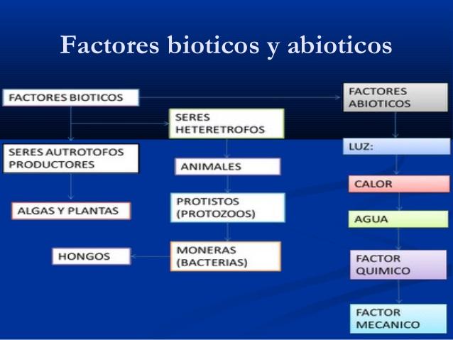 elementos-abiticos-y-biticos-8-638