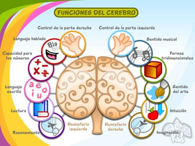 Mapas mentales sobre el cerebro y sus funciones | Cuadro Comparativo