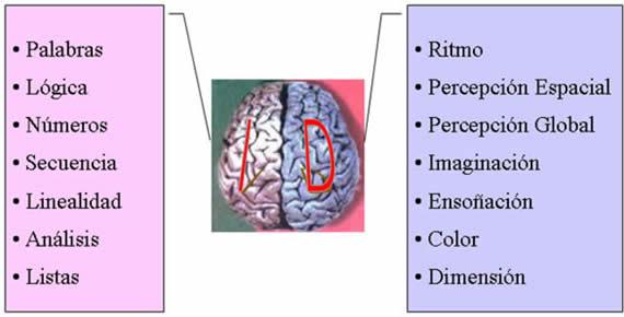 lateralizacion-cerebro