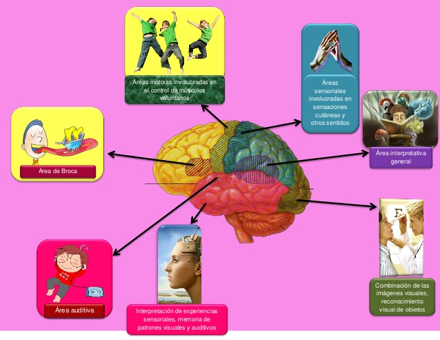 mapa-mental-de-las-funciones-de-la-corteza-cerebral-1-638