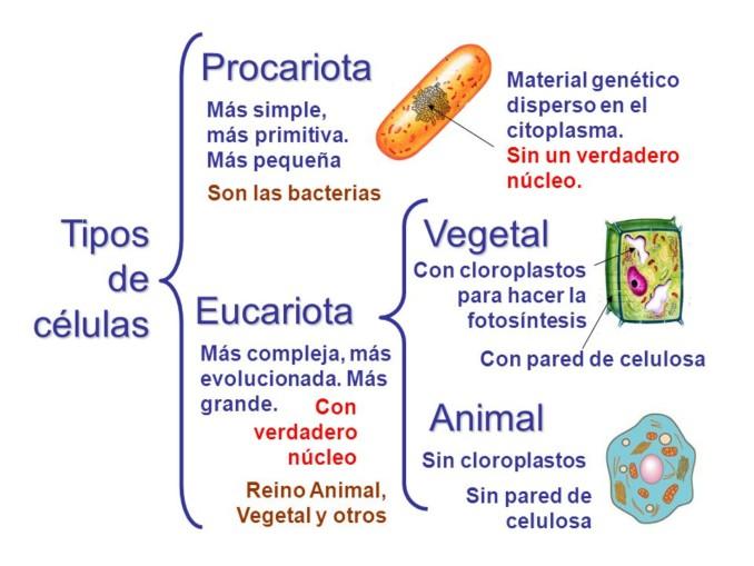sinoptico-tipos-de-celulas