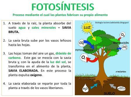 Ecuacion de la fotosintesis y respiracion celular 6