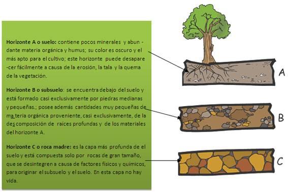 Cuadros sin pticos sobre el suelo y sus componentes - Suelos para ninos ...