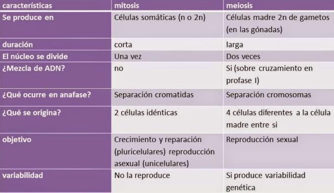 Cuadros Comparativos De Mitosis Y Meiosis Cuadro Comparativo