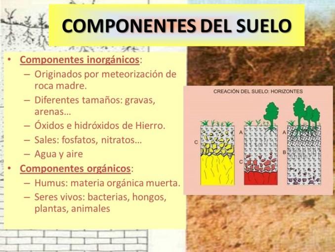 Cuadros sin pticos sobre el suelo y sus componentes for Como esta constituido el suelo
