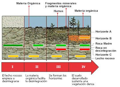 Cuadros sin pticos sobre el suelo y sus componentes for Como se forma y desarrolla el suelo