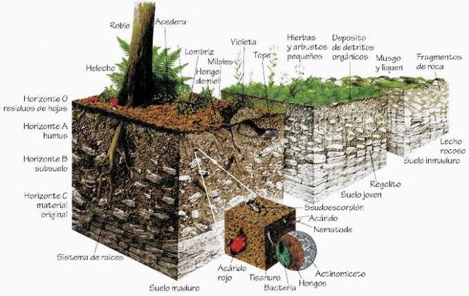 Cuadros sin pticos sobre el suelo y sus componentes for Materiales que forman el suelo