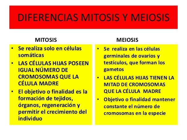 Cuadros Comparativos Division Celular Mitosis Y Meiosis Cuadro