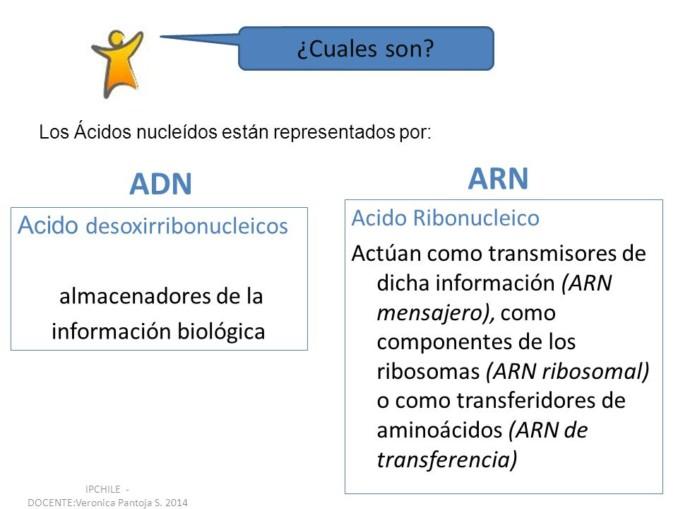 Cuadros Comparativos Entre Arn Y Adn Cuadro Comparativo