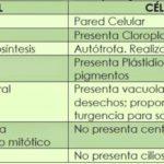 Cuadros comparativos entre celulas animales y vegetales