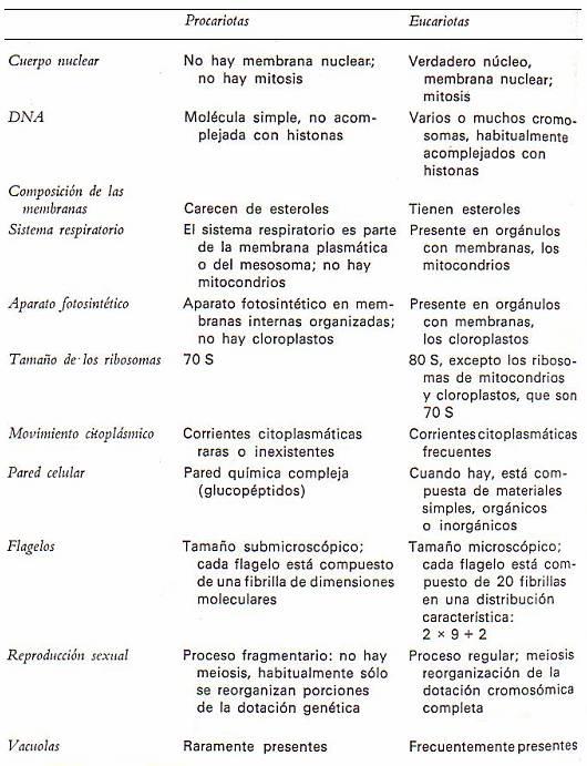 Cromosomas eucariotas procariotas cuadro comparativo de adn