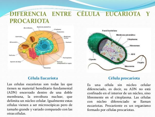 Cuadros Comparativos Diferencias Entre Células Procariotas Y Eucariotas Cuadro Comparativo