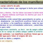 Características, diferencias y similitudes de mamíferos y ovíparos