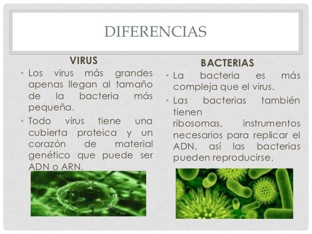 semejanzas y diferencias entre virus y priones