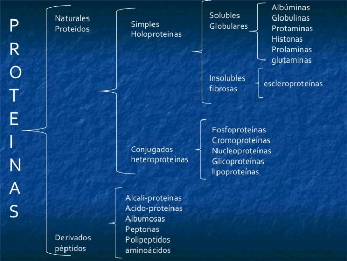 Proteínas Cuadros Sinópticos Y Comparativos Cuadro