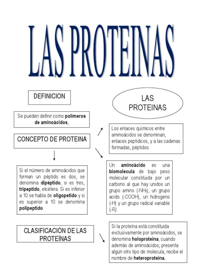 Proteínas: Cuadros sinópticos y comparativos | Cuadro Comparativo