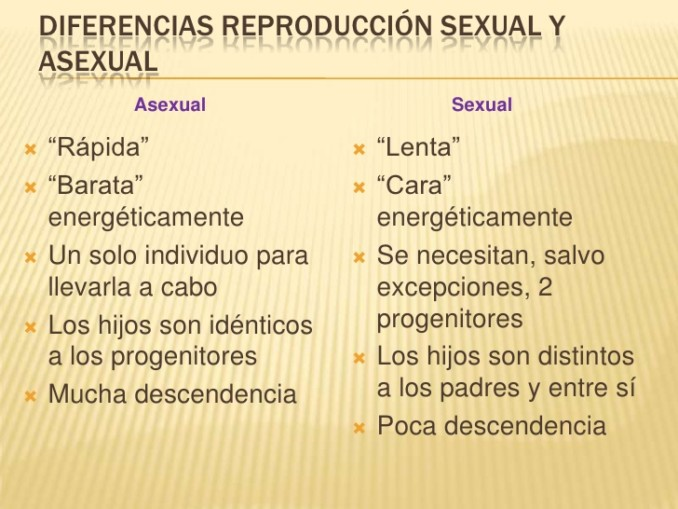 Reproduccion sexual asexual diferencias