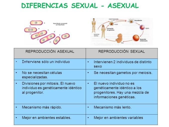 Cuadro comparativo entre sexual y asexual