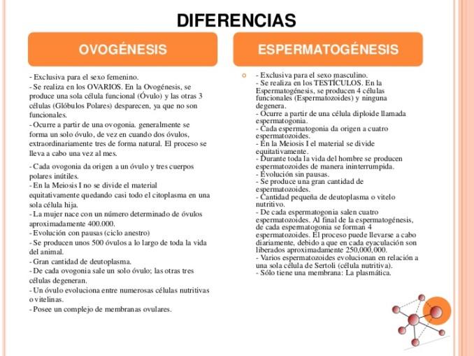 Cuadros Comparativos Entre Espermatogenesis Y Ovogenesis Cuadro