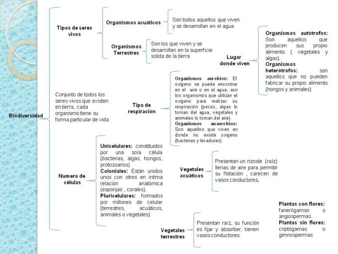 Cuadros Sinópticos Sobre Biologia Cuadro Comparativo