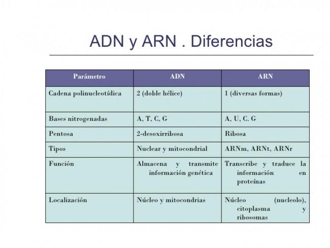 Diferencias Entre Adn Y Arn Cuadro Comparativo